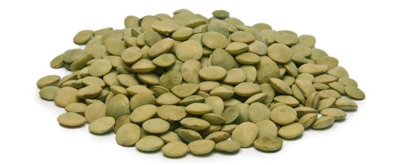 adascan grain lentil exporting