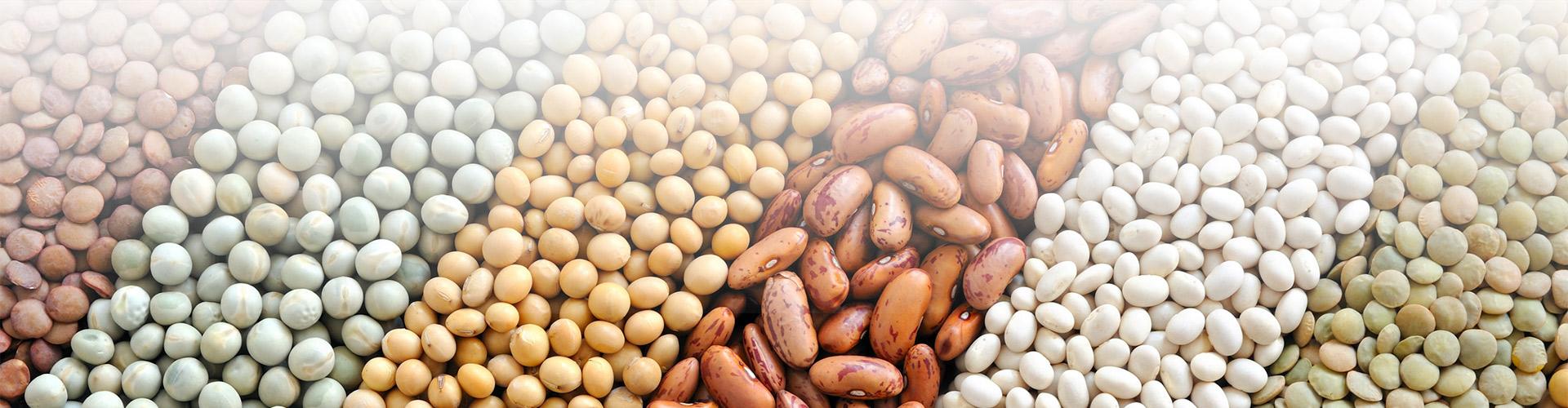 beans banner