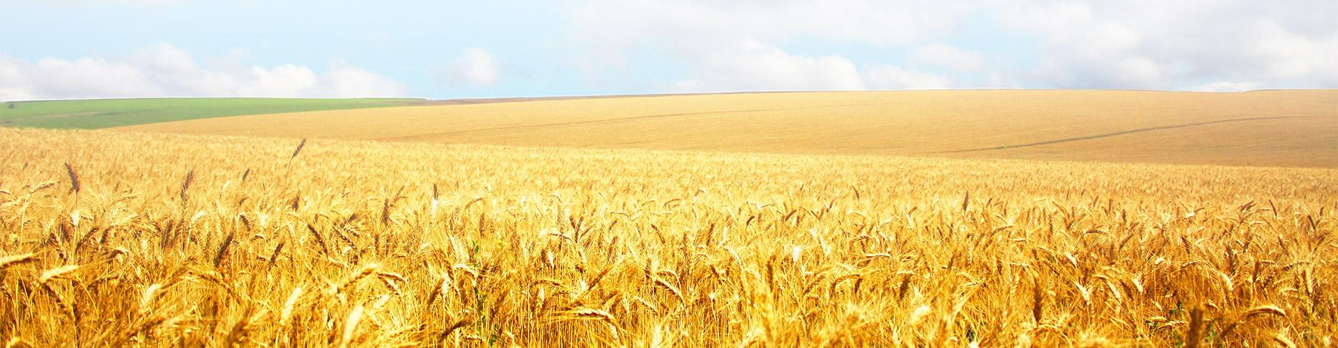 canada crops banner