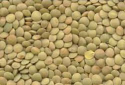 canadian organic small green lentil eston