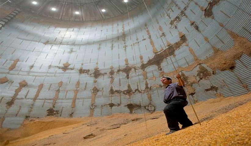 Check Up Grains