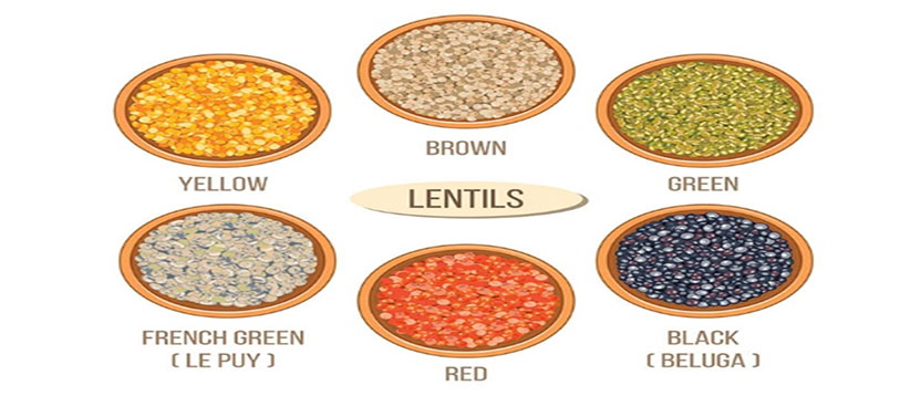 common lentil types