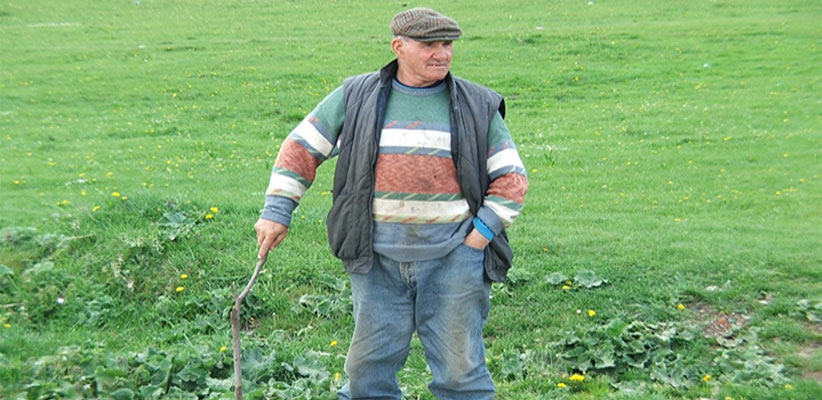 Destructive Insects In Farms
