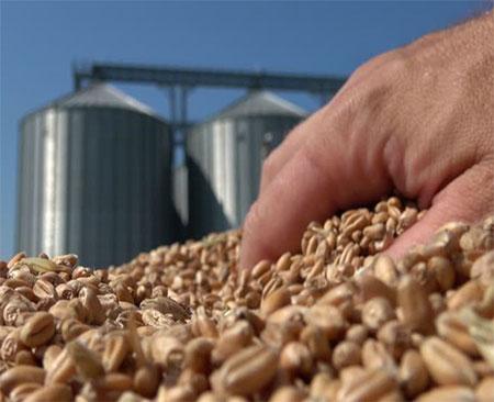 Ensure Quality Of Grain