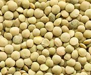 lentils eston product