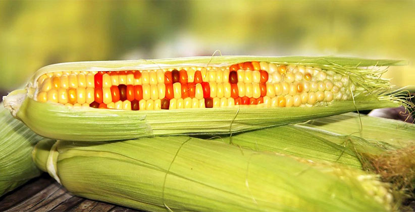 non-genetically modified organisms